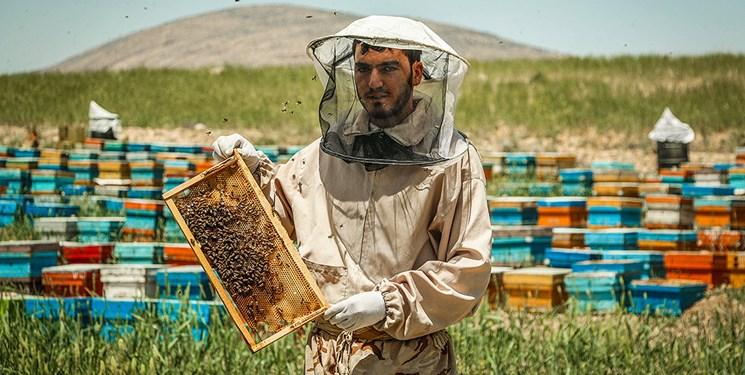 نیش خشکسالی بر صنعت زنبورداری / تولید ۱۳ هزار تن عسل در آذربایجان شرقی