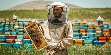 اشتغال ۶۹۶۶ هزار نفر در بخش طیور و زنبور عسل همدان