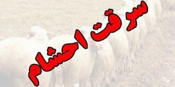 دستگیری  8 نفر از اعضای یک باند حرفهای سرقت های سریالی احشام در خاش