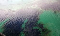 آلودگی نفتی در محدوده خلیجفارس پاکسازی شد