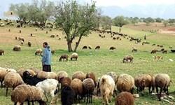 آغاز فصل چرای پائیزه از اول آبان در مراتع قشلاقی ورامین
