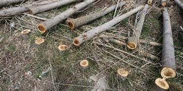درخت قطع شده جنگلی پیدا کنید «جایزه بگیرید»