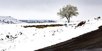 احتمال بارش برف در ارتفاعات شمالی خراسانجنوبی/ کاهش محسوس دما در راه است