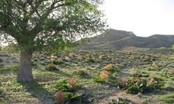 برداشت گیاهان دارویی در حاجیآباد غیرمجاز است
