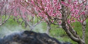 خسارت ۸۳ میلیاردی سرما به باغات کهگیلویه و بویراحمد در فروردین ۹۹