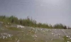 فیلم دستههای ماهی  بر روی جاده دارخوین به شادگان