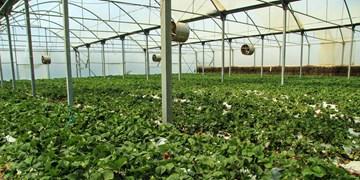مطالعات آماری شهرکهای کشاورزی و گلخانهای در کردستان انجام شد