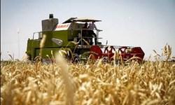پیشبینی برداشت ۶۳ هزار تن جو از مزارع خراسانجنوبی/ اعلام نرخ تضمینی خرید جو