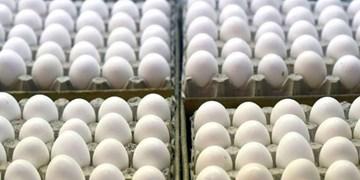 فروش تخم مرغ شانه ای در ارومیه تخلف صنفی محسوب می شود
