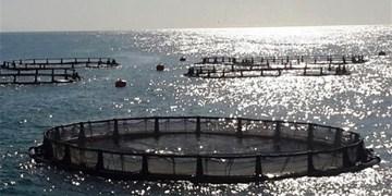 تولید ۱۷۰۰ تن ماهی در دریاچه کارون ۴