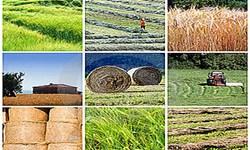 تغییر کاربری زمین های کشاورزی و ناکارآمدی سیاستها مانع اصلی در رونق تولید کشاورزی