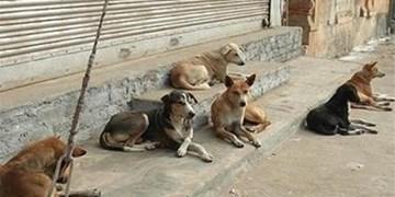 جمع آوری سگ های ولگرد از معابر شمال شرق تهران