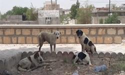 فارس من | شهرداری قاین: روزانه ۱۰ سگ جمعآوری میشود/ راه ورود سگها مشخص نیست!