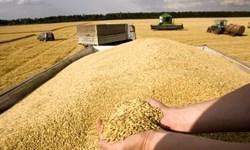 نرخ پایین خرید تضمینی گندم تهدید امنیت غذایی کشور