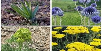 گیاهان دارویی، گنجینهای غنی در عرصه اقتصاد/ ضرورت تقویت صنایع تبدیلی در استان فارس