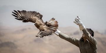 معرفی ۵۶۴ متخلف حوزه محیط زیست به مراجع قضایی اردبیل/ ۳۱۱ پرنده به آغوش طبیعت بازگشتند