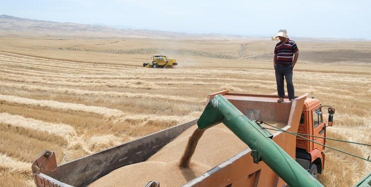 کیفیت خاک و رطوبت گندم وارداتی بررسی میشود/ لزوم مقابله با قاچاق گندم