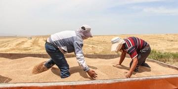 حمل گندم از استانی به استان دیگر ممنوع شد