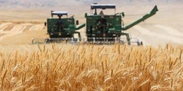 آغاز برداشت گندم در سیستان و بلوچستان