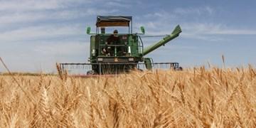 پیشبینی خرید ۴۰۰ هزار تنی گندم در لرستان/پرداخت ۸۰ درصد مطالبات گندمکاران