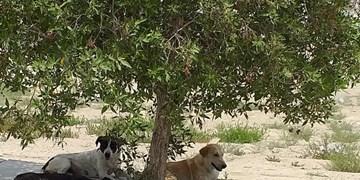فارس من| تکلیف سگهای ولگرد در فسا مشخص شد