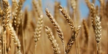 افزایش 23 درصدی تولید محصولات زراعی در کشور