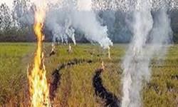 تکرار اشتباه آتش زدن کاه و کلش در مزارع مازندران