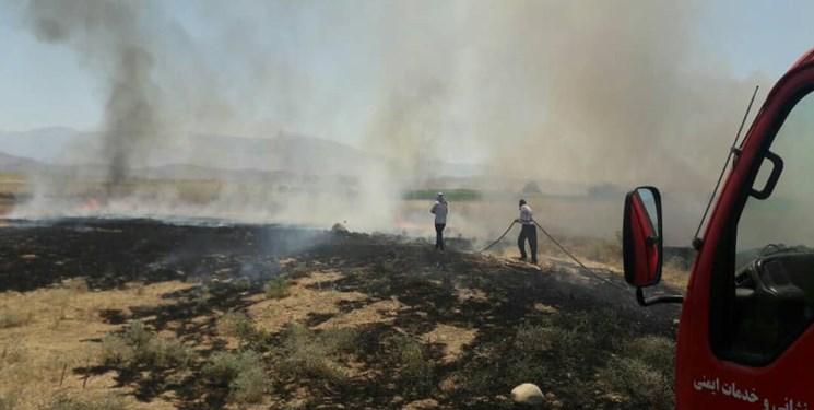 ۱۱۶ مورد آتشسوزی در مزارع پیشوا در یکماه/ بیشتر آتشسوزی ها عمدی بود!