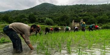 کشاورزان مزارع خود را هرچه سریعتر آماده کشت کنند