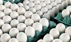 توزیع تخم مرغ تنظیم بازار در البرز/قیمت مصوب هر شانه تخم مرغ 22 هزار تومان