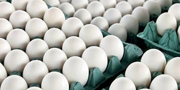 صادرات تخممرغ ممنوع شد+سند