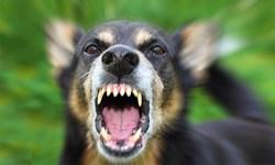 فارس من  آخرین وضعیت پرونده حمله سگ به زن باردار در اصفهان