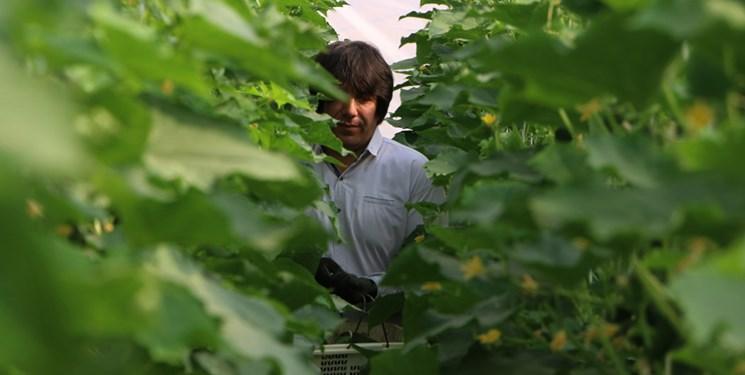 کشت گلخانهای نسخهای برای توسعه کشاورزی/احداث 570 گلخانه در مازندران