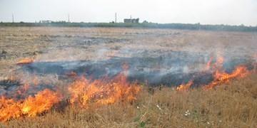 6 هکتار از مزارع سرپل ذهاب طعمه حریق شد/ فرماندار: 20 تن گندم در آتش از بین رفت
