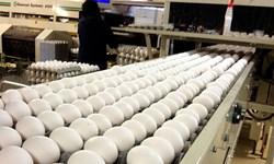 ۵۰ درصد تولید تخم مرغ در آذربایجانشرقی مازاد بر نیاز است/  تولید 10 درصد تخم مرغ در کشور در استان