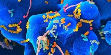 برای نخستین بار کشف شد؛ عفونت نورو ویروس تحت تأثیر میکروبهای «روده»