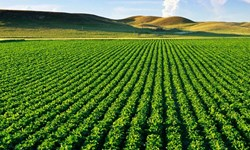 آغاز کاشت سویا در بیش از ۱۰۰۰ هکتار از اراضی مغان