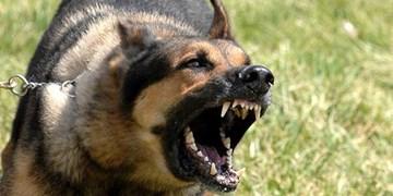 جزئیات تازه از ماجرای حمله سگ به زن باردار/ دستور فرمانده پلیس اصفهان و تذکر نمایندگان به وزیر کشور