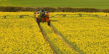 توسعه صنعت دانههای روغنی تضمینی برای  سلامت و اقتصاد جامعه