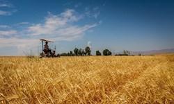 کاشت گندم در بیش از 149 هزار هکتار  از اراضی کشاورزی استان قزوین