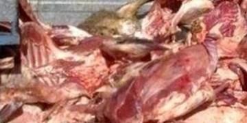 کشف 1.5 تن گوشت فاسد درعجبشیر
