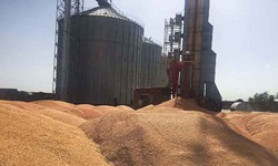 70درصد پول گندمکاران پرداخت شده است/سه ارگان طبق قانون اعتبار خرید گندم را تأمین کنند