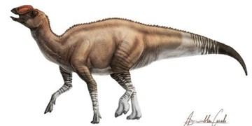 کشف استخوانهای صدمیلیون ساله بچه دایناسور+تصاویر