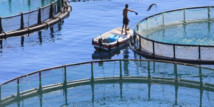 فعالیت 14 هزار نفر در صنایع آبزیپروری لرستان/ رتبه اول تکثیر ماهیان سردآبی را داریم
