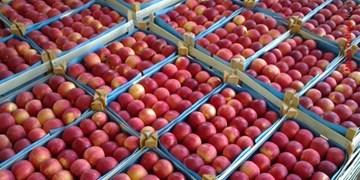 آغاز پرداخت یارانه صادراتی به صادرکنندگان سیب درختی آذربایجانغربی/ 70میلیارد ریال آماده پرداخت