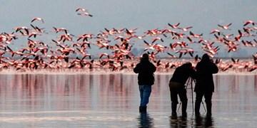 پیگیری ماجرای مرگ دستهجمعی پرندگان در میانکاله + جزئیات