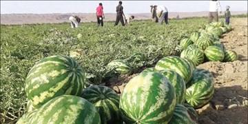 برداشت 15هزار تن هندوانه از مزارع گچساران
