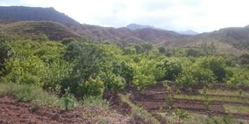 هشدار درباره تخریب باغها و تغییر کاربری در شهر سردرود