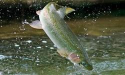 دستگیری صیاد غیرمجاز ماهی در دریاچه سد گیوی/ شکارچی بز وحشی به دام افتاد