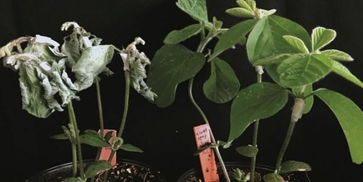 محافظت از گیاهان با ترکیب شیمیایی کرمها